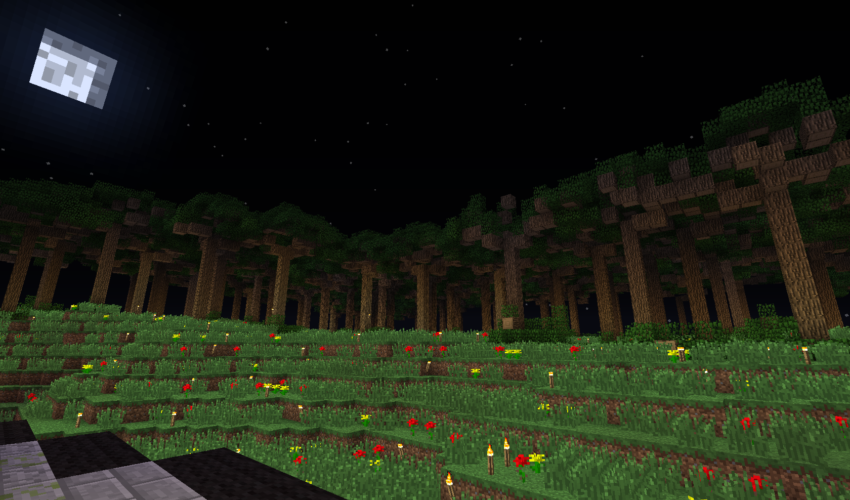 las dużych drzew
